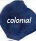 blue colonial flower petals 468