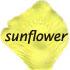 sunflower flower petals 408