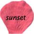 sunset flower petals 415