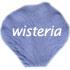 wisteria flower petals 425