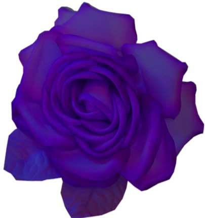 Purple silk flower