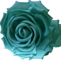 Turquoise Back Flower