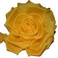 Mustard Back Flower
