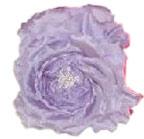 Lavender Heaven Rose